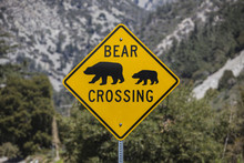 Bear Crossing Highway Sign Wit...