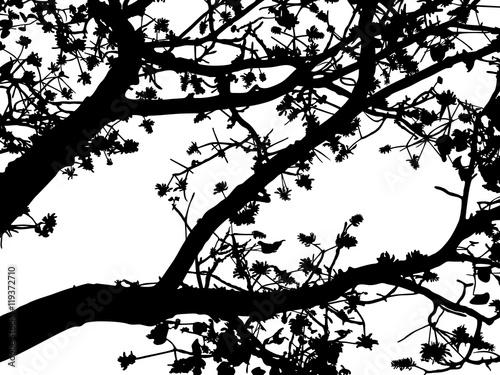 Photo sur Toile Oiseaux sur arbre Tree branches