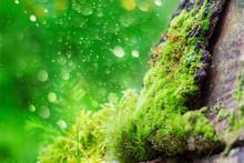 Green Moss On Bark Against Bok...