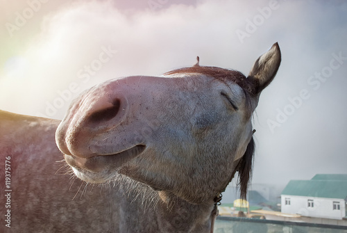Poster Chevaux Happy horse