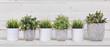 Leinwandbild Motiv Pot plants in white pots and concrete on a background of white b