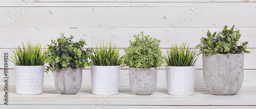 Fotobehang Planten Pot plants in white pots and concrete on a background of white b