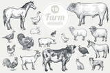 Farm animals. Goat, cow, horse, sheep, pig, bull, sheep, donkey, dog, cat, bird goose, quail, duck, couple turkeys, rooster, hen, guinea hen. Isolated on white background. Vintage vector set .