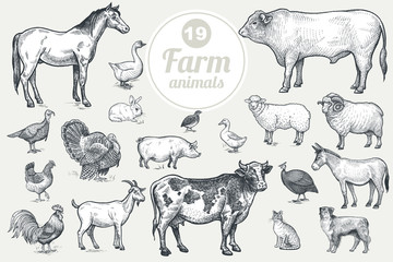 Fototapeta Farm animals. Goat, cow, horse, sheep, pig, bull, sheep, donkey, dog, cat, bird goose, quail, duck, couple turkeys, rooster, hen, guinea hen. Isolated on white background. Vintage vector set .