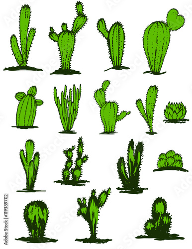 Collection Hand Drawn Green Cacti Vector Ilration Diffe Types Of Cactus Plants Realistic Decorative