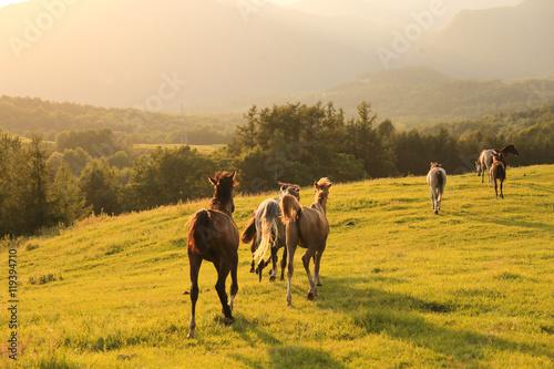 Fototapeta 北海道の馬 obraz