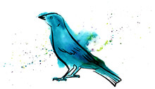 Vector And Watercolor Drawing Of Teal Blue Bird
