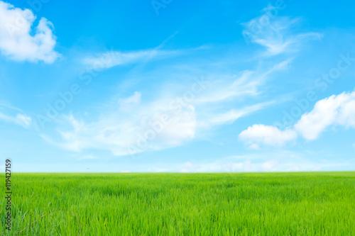 Foto op Plexiglas Platteland grass field
