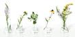 Leinwandbild Motiv Flowers and plants in flask isolated on white background