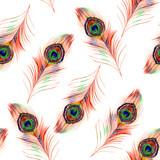 Akwarela pawie pióro wzór na białym tle - 119432524