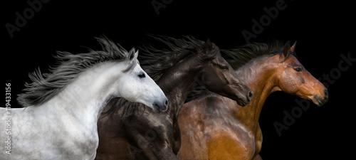 Obraz Horses portrait run isolated on black background - fototapety do salonu