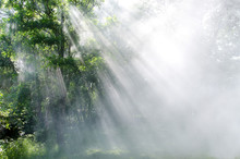 Light Through The Trees In Fog...
