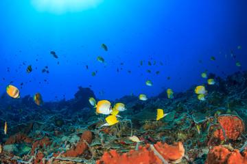 Fototapeta na wymiar Coral reef underwater. Tropical fish butterflyfish