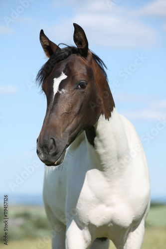 Photo Portrait of nice paint horse in summer