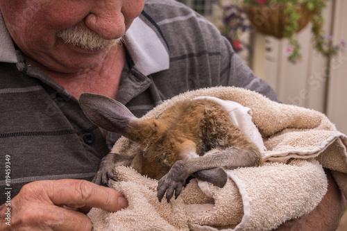 Caregiver bottle feeding young kangaroo, Coober pedy, Australia