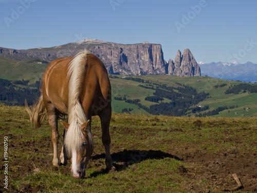 Fotografie, Obraz  Cavallo sulle Alpi