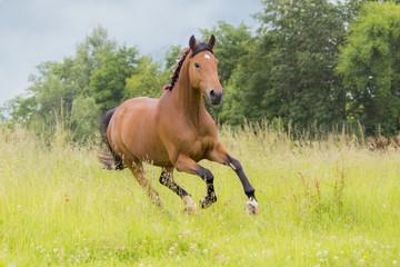 Panel Szklany Podświetlane Wiejski Pferd läuft auf Koppel