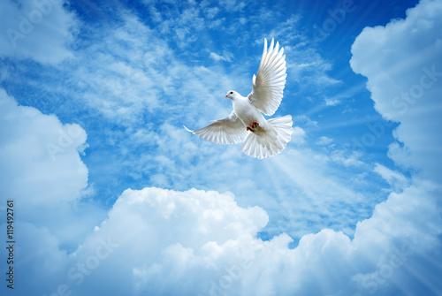 Beautiful dove in a blue sky symbol of faith Fototapeta
