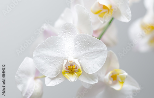 Poster Spa orchidée phalaenopsis