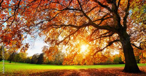 fototapeta na drzwi i meble Schöne Eiche auf Wiese bei untergehender Sonne im Herbst