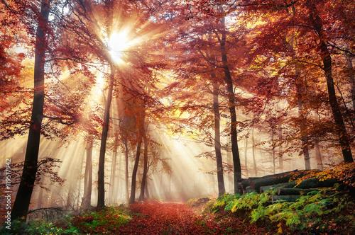 Photo  Faszinierende Lichtstimmung in einem bunten Wald im Herbst bei Sonnenschein im N