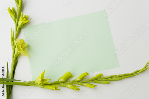 Flowers gladiolus and empty paper sheet on white background from above, top view Wallpaper Mural