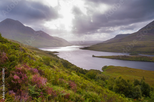 Scottish highlands lake view with heather in bloom