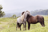 Fototapeta Konie - Horses standing on grassy field against sky