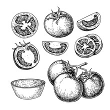 Tomato Vector Drawing Set. Iso...
