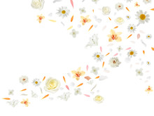 Flying Flower Buds And Petals Isolated On White