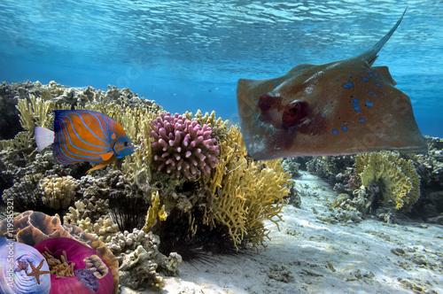 cudowny-i-piekny-podwodny-swiat
