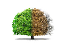 Concept Of Regeneration. The I...