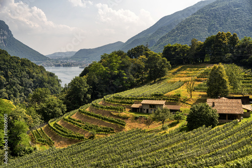 Fototapeta Vineyard near Arogno (Ticino, Switzerland)