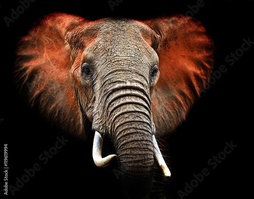 Fotografía Elephants of Tsavo
