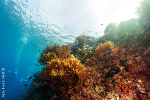 Poster Coral reefs Reef