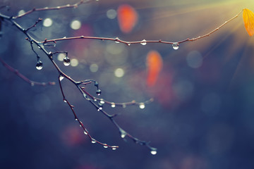 rain drops on a branch. shallow depth of field.