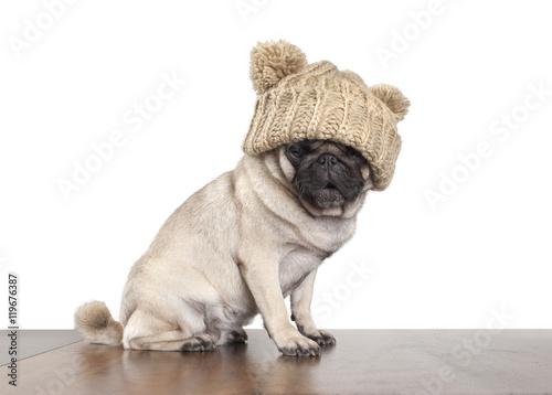 Poster Dog schattig mopshondje met gebreide muts zit en kijkt verbaasd