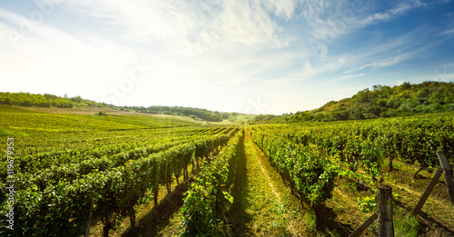 Canvas Prints Vineyard Vineyard