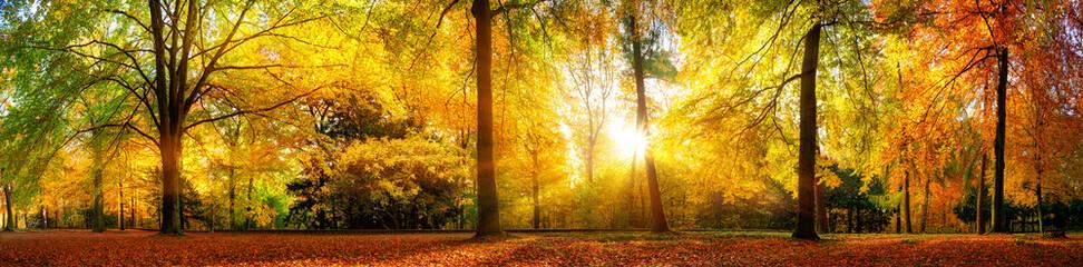 Panel Szklany Podświetlane Panorama Panorama von einem herrlich schönen Wald im Herbst bei goldenem Sonnenschein