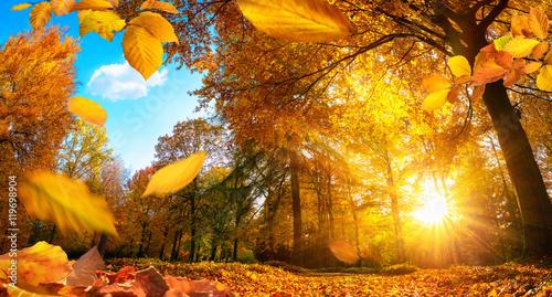 Poster Miel Goldener Herbst in einem Park, mit fallenden Blättern und blauem Himmel