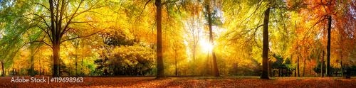 Poster  Panorama von einem herrlich schönen Wald im Herbst bei goldenem Sonnenschein