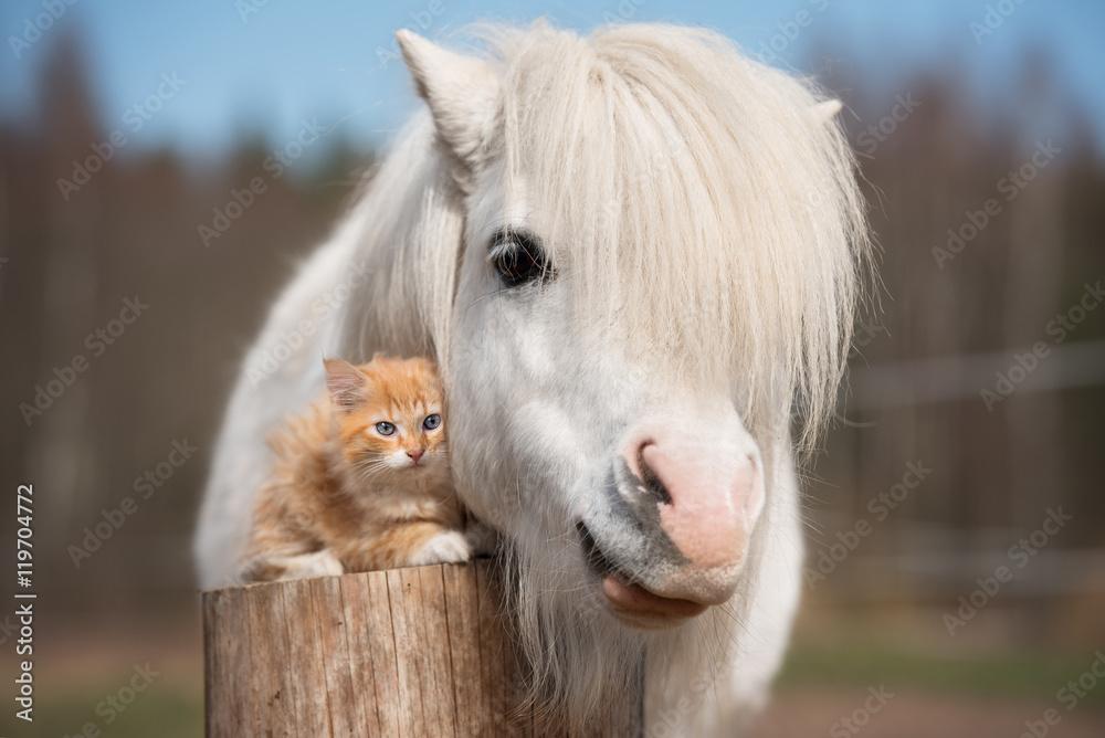 Fotografie, Obraz Little red kitten with white shetland pony