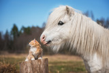 Fototapeta Pokój dzieciecy - Little red kitten with white shetland pony