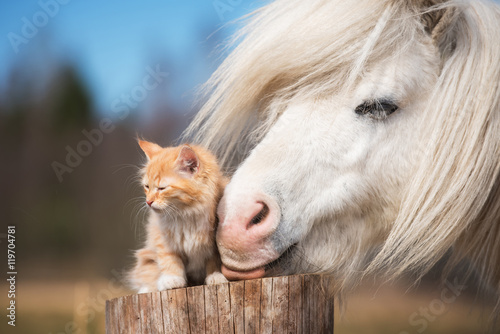 Photo  Little red kitten with white shetland pony