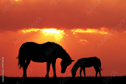 Garden Poster Brown horse and pony at sunset