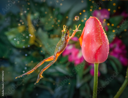 Spoed Foto op Canvas Kikker Catch the ball - Frog jumps toward a tulip in time as if to catch the water ball.