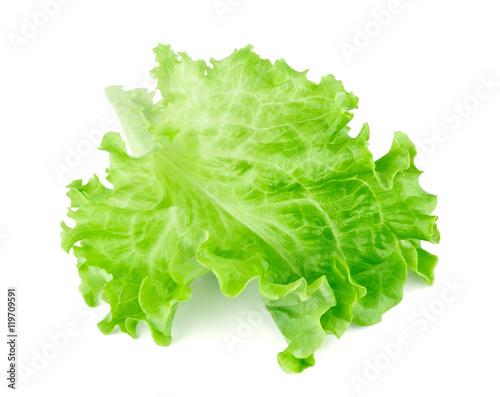 Obraz Lettuce leaf - fototapety do salonu