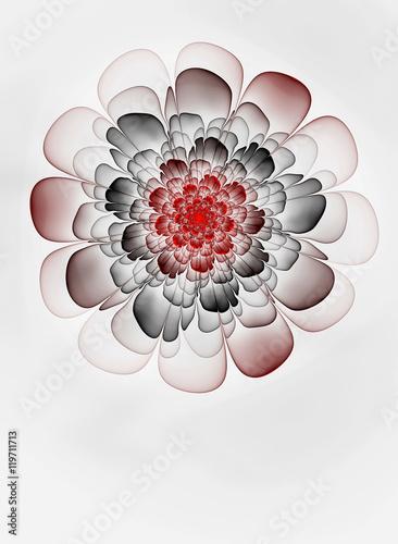 Fotografie, Obraz  Abstract  fractal transparent flower