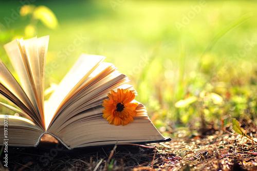 Montage in der Fensternische Gelb Schwefelsäure open book with flower on grass