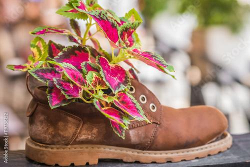 Zdjęcie XXL Świeże kolorowe rośliny rosnące w starym poszarpanym brązowym bucie